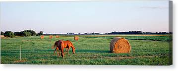 Southern Illinois Canvas Prints