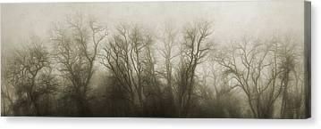 Treeline Photographs Canvas Prints
