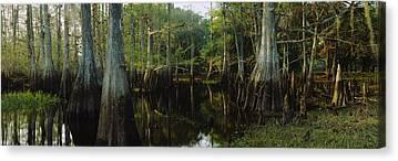 Fisheating Creek Canvas Prints