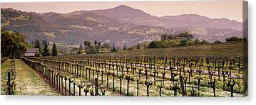 Asti Vineyards Photographs Canvas Prints