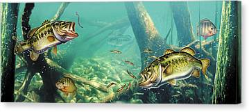 Largemouth Canvas Prints