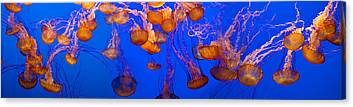 Image Of Jelly Fish Canvas Prints