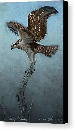 Osprey Canvas Prints