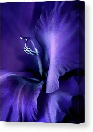 Purple Gladiola Canvas Prints