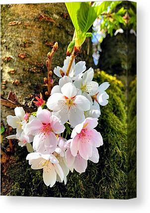Apple Tree Canvas Prints