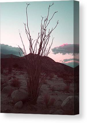 Anza Borrego Canvas Prints