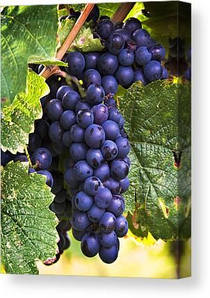 Ripe Grapes Canvas Prints