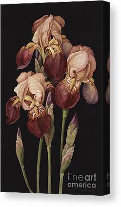 Crimson Lilies Canvas Prints