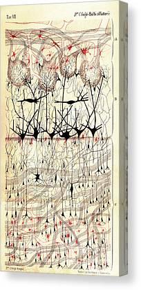 Golgi Canvas Prints