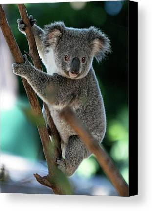 Koala Limited Time Promotions