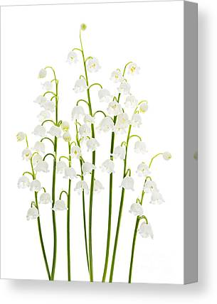 Lily-of-the-valley Canvas Prints