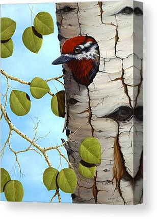 Sapsucker Canvas Prints