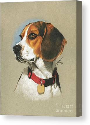 Beagle Canvas Prints