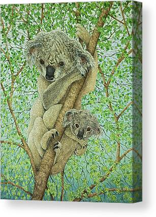 Koala Paintings Canvas Prints