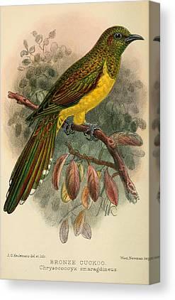 Cuckoo Canvas Prints
