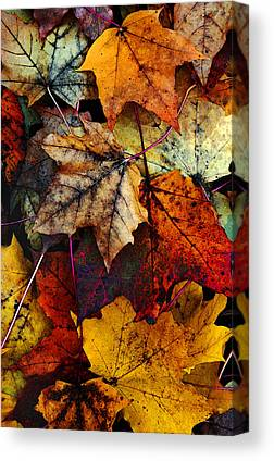 Color Enhanced Canvas Prints