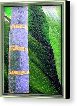 Botanical Digital Art Limited Time Promotions