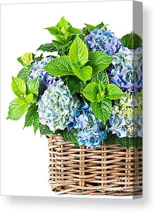 Flower Delivery Nyc Canvas Prints