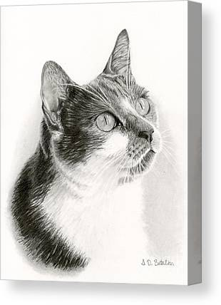 House Pet Drawings Canvas Prints