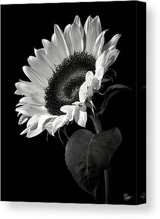 White Flower Canvas Prints