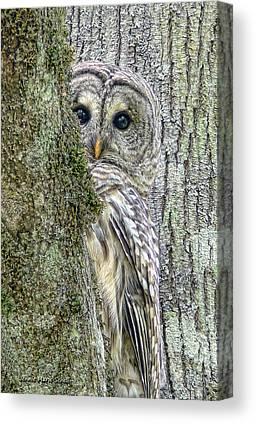 Lichen Canvas Prints