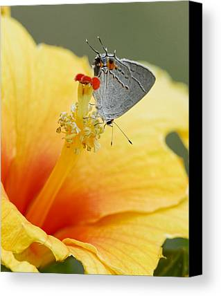 Feeding Photographs Limited Time Promotions