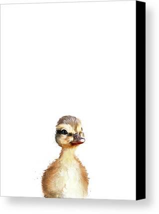 Duck Canvas Prints