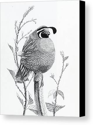 Pen And Ink Drawing Drawings Limited Time Promotions