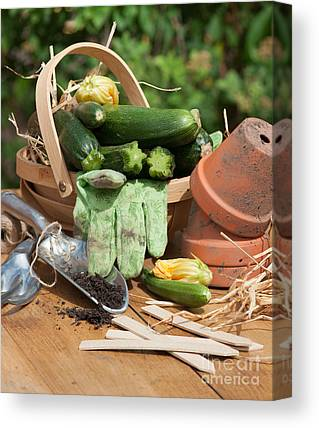 Organic Garden Canvas Prints