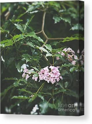 Pink Poui Canvas Prints