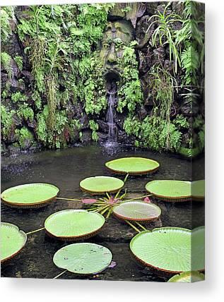 Victoria Amazonica Canvas Prints