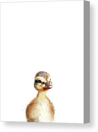 Ducks Canvas Prints