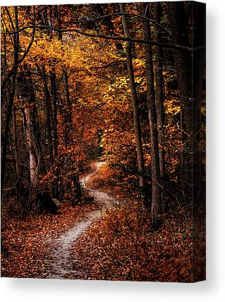 Forest Walk Canvas Prints