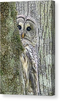 Avian Canvas Prints