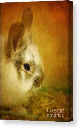I Baby Rabbit In Grass Art Print Home Decor Wall Art Poster
