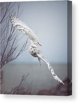 Wings Canvas Prints