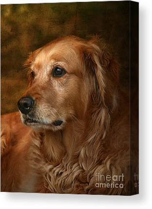 Golden Retrievers Canvas Prints