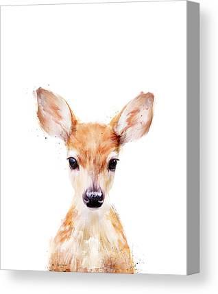 Fawn Canvas Prints