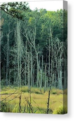 Alabama Autumn Marsh Canvas Prints