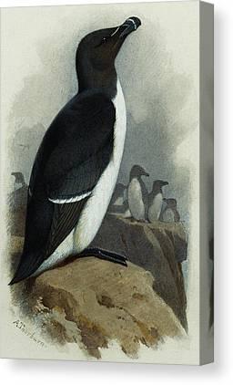 Razorbill Canvas Prints