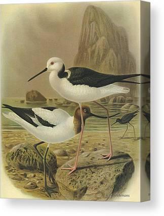 Australian Wildlife Paintings Canvas Prints