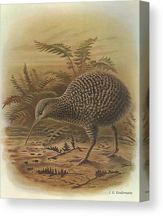 Kiwi Bird Canvas Prints