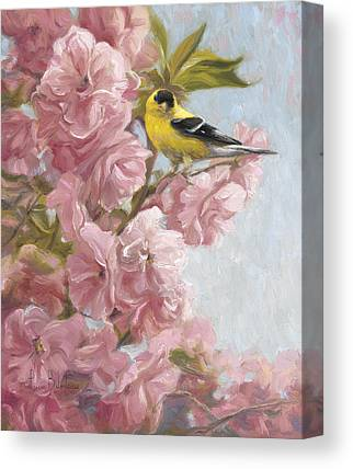 American Goldfinch Canvas Prints