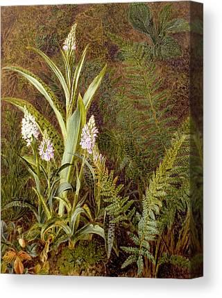 Wild Orchid Canvas Prints