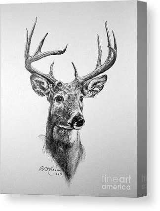 Kaelin Drawings Canvas Prints