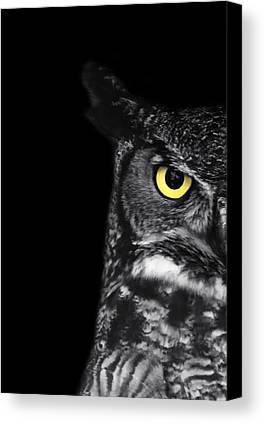 Owl Canvas Prints