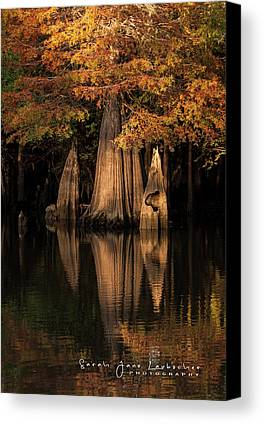 Bald Cypress Photographs Limited Time Promotions
