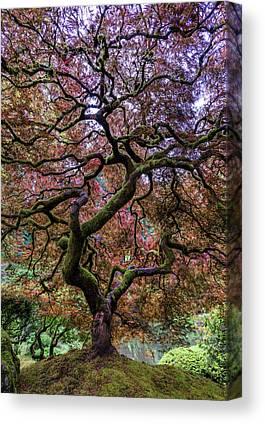 Japanese Maple Canvas Prints