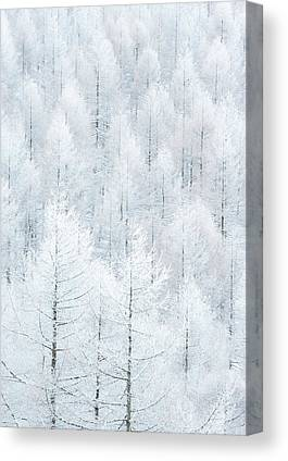 Hoarfrost Canvas Prints
