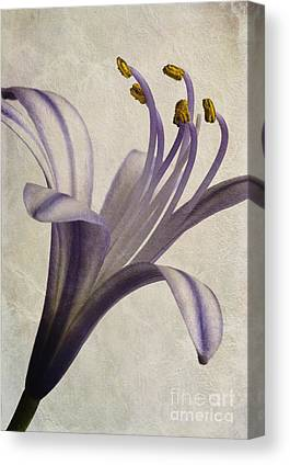 Close Focus Floral Digital Art Canvas Prints